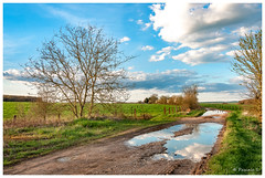 Après l'orage (Pascale_seg) Tags: paysage landscape country countryscape campagne champ pluie orage flaque reflet reflection moselle lorraine france nikon chemin terre nature earth spring printemps sky ciel nuages clouds arbre tree