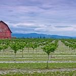 Barn and Orchard 8807 B thumbnail