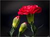 LR7-PGH57420 (JB89100) Tags: 2018 fleurs stmartindt ou quoi