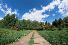 trail in the botanic garden (Nikita Terenin) Tags: garden green