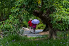 garden (Greg Rohan) Tags: flower flowers grass path garden people umbrella park tree trees green australia romastreet brisbane queensland d750 2018 nikon nikkor