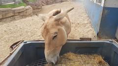 20180523_143817 (TheSlayerNL) Tags: wildlands emmen zoo dieren animals adventure wildlandsadventurezoo