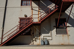The generous stand of the best hours (bhautik_joshi) Tags: stairs fortmason shadows sf sanfrancisco california unitedstates us