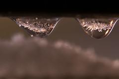 goute, macro et lumière (Rudy Pilarski) Tags: nikon tamron thebestoffnikon thepassionphotography d7100 90mm nuit night goute glace ice couleur color colour macro eau water lumière light