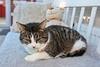 IMG_2124 (d_fust) Tags: cat katze fust pauline tier haustier kätzchen animal кот gato katt 貓 kissa γάτα 猫 kedi macska แมว gatto बिल्ली gatito γατάκι yavrusu 小貓 kitten का बच्चा anak kucing gattino 仔猫 고양이