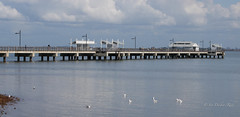 Where seagulls also come to relax (idunbarreid) Tags: seagulls pier water
