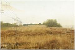 [ isle of may ] (Čαℓуρѕσ Ẳρρℓєωнутє) Tags: isleofmay sl secondlife exploring travel place sim landscape weed field peace