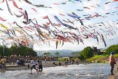 Koinobori Festival (yukky89_yamashita) Tags: 大阪 高槻市 芥川 芥川桜堤公園 osaka takatsuki festival river koinobori japan water