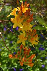 Colourful Spring (JKmedia) Tags: spring may 2018 cornwall lanhydrock nationaltrust boultonphotography green sunny warm