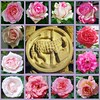 Himmelfahrt 2018: Die Stunde der Vollendung kam (amras_de) Tags: lamm anyell lamb cordero arkume agneau lam rose rosen ruža rosa ruže rozo roos arrosa ruusut rós rózsa rože rozes rozen roser róza trandafir vrtnica rossläktet gül blüte blume flor cvijet kvet blomst flower floro õis lore kukka fleur bláth virág blóm fiore flos žiedas zieds bloem blome kwiat floare ciuri flouer cvet blomma çiçek
