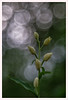 Diaplan 5 (Outlaw Pete 65) Tags: macro closeup fiore flower orchidea orchid colori colours natura nature luce light fujixe3 meyeroptikdiaplan80mm collebeato lombardia italia