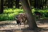 _DSC1805.jpg (Burghart-Alexander) Tags: orte deutschland pflanze poing wildpark tiere bäumeundsträucher europe bayern bundesland umwelt