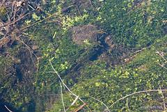 Волинське болото Еладея InterNetri Ukraine 23