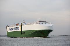 CSCC SHANGHAI (angelo vlassenrood) Tags: ship vessel nederland netherlands photo shoot shot photoshot picture westerschelde boot schip canon angelo walsoorden cargo csccshanghai roro