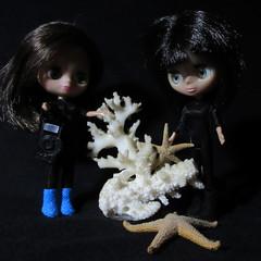 BaD 14 May 2018: It's Macro Monday. (jefalump) Tags: lpspetiteblythe campfashion bunnyduo coral starfish photo macro