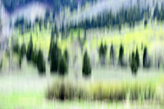 Visit the Mountains (Karen McQuilkin) Tags: icm wasarchforest pinetrees aspens spring impression