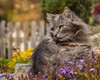 Garden with fluffball (FocusPocus Photography) Tags: fynn fynnegan katze kater cat chat gato tier animal haustier pet garten garden