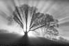 Burst (aveyardphotography) Tags: sun burst sunburst trees light bright mono monochrome