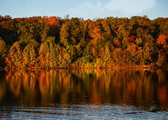 Autumn 2015 Chambers Lake (Daveyal_photostream) Tags: landscape lightroom leaves lake autumn trees colorful vibrant meandmygear mygearandme mycamerabag motion movement water amazing awesomeshots pennsylvania chamberslake nikon nikor nature clouds woods sunlit forest coastline tree sky bluesky serene wood ripples reflecetion