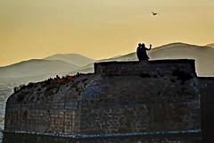 Ibiza. Spain. (COLINA PACO) Tags: ibiza selfie gaviota seagull franciscocolina tramonto puestadesol ocaso sunset