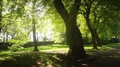 Burnley Lancashire (Zak Aesop) Tags: scottpark burnley trees shadows lancashire