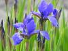 (azalicja) Tags: wiosna spring flowers nature colours