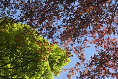 Canopy (Tony Tooth) Tags: nikon d7100 nikkor 105mm leaves foliage may spring red green blue copper emerald newtown staffs staffordshire