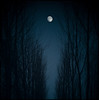 La noche oscura (una cierta mirada) Tags: moon landscape trees branches night fullmoon nature blue dark forest woods