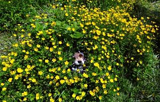 Un ratón entre las flores.....