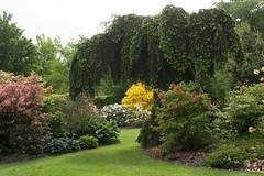 """Arboretum """"Het Leen""""- Eeklo - Belgium (wietsej) Tags: arboretum hetleen eeklo belgium sony rx10 iv rx10m4 botanical garden flowers nature"""