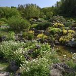 Jardin Botanique Jean-Marie Pelt - Alpinum thumbnail