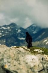 IMG_3245-24 (niggow) Tags: hiking wandern wanderung germany bavaria bayern deutschland österreich alps sonnwendjoch ht sonndwendjoch hinteres photoshop photography photographer photo photoshoot photographie wanderlust take more adventures ausflug mountains berge alpen bayrische