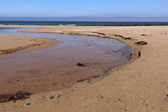 St Combs Beach_may 18_649 (Alan Longmuir.) Tags: stcombsbeach grampian aberdeenshire stcombs