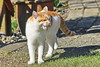 IMG_0471 (d_fust) Tags: cat katze fust tier haustier kätzchen animal кот gato katt 貓 kissa γάτα 猫 kedi macska แมว gatto बिल्ली gatito γατάκι yavrusu 小貓 kitten का बच्चा anak kucing gattino 仔猫 고양이