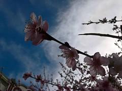 WP_20180403_11_37_54_Raw (vale 83) Tags: blossom microsoft lumia 550 coloursplosion colourartaward friends