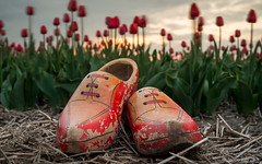 wooden shoes and tulips at sunset (© Jenco van Zalk) Tags: sunset tulips woodenshoes shoes wooden klompen nature tulipfields toeristattraction netherlands