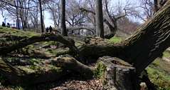 Central Park Saturday #6 (Keith Michael NYC (4 Million+ Views)) Tags: centralpark manhattan newyorkcity newyork ny nyc