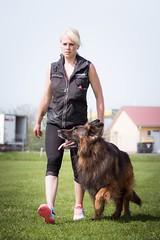 Obedience (zola.kovacsh) Tags: outdoor animal pet dog ipo schutzhund old german shepherd meadow sun grass