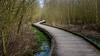 Promenons-nous dans les bois (musette thierry) Tags: balade photo thierry musette d800 sentier passage 28300mm bois passerelle anstaing nordpasdecalais france printemps avriel