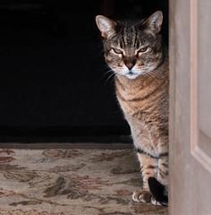 Chaucer By the Door (marvhimmel) Tags: general chaucerthecat brown pet door