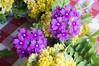 Ψίνθος (Psinthos.Net) Tags: ψίνθοσ psinthos mayday πρωτομαγιά μάιοσ μάησ άνοιξη may spring afternoon απόγευμα απόγευμαάνοιξησ ανοιξιάτικοαπόγευμα άγριαλουλούδια λουλούδια αγριολούλουδα κίτριναλουλούδια κιτρινάκια yellowflowers wildflowers flowers wreath στεφάνι μαγιάτικοστεφάνι