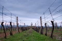088_Moravian_Tuscany (Overtherainbow changes to KV Photography) Tags: katerinavodrazkova kvphotography landscape moravsketoskansko morava krajina moraviantuscany jiznimorava southmoravia moraviantoscana šardice