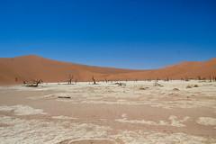 IMG_9942 (tregnier) Tags: namibia roadtrip africa travel desert animals sossusvlei leopard cheetah lion solitaire trip