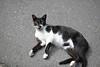 Cat (Ache_Hsieh) Tags: cat cute pet 貓 喵 街貓 street nikon d850 tamron sp 35mm f18 di vc usd f012