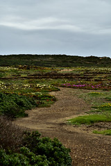 28-04-2018 - Costa Vicentina (Arrifana & Odeceixe) (64) (ricardosantos1971) Tags: landscape seascape nature sky people flowers ruins clifs sea