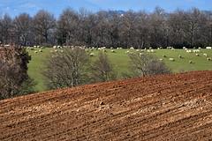 Scorcio Sabino (luporosso) Tags: natura nature naturaleza naturalmente nikon nikonitalia scorcio scorci campagna country countryside lazio italia italy landscape landscapes paesaggio paesaggi