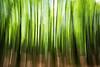 Centovalli Trees (Toni_V) Tags: m2407776 rangefinder digitalrangefinder messsucher leicam leica mp typ240 type240 28mm elmaritm12828asph hiking wanderung centovalli camedointragna tessin ticino switzerland schweiz suisse svizzera svizra europe green trees baum bäume frühling spring movement motion blur abstract ©toniv 2018 180510