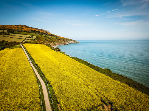 View of the Rapeseed Fields