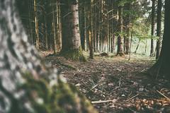 (a└3 X) Tags: natur nature alexander olympus sonne licht wald österreich neustift landscape outdoors color tree bäume