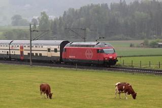 SBB Lokomotive Re 460 084 - 7 mit Taufname Helvetia mit neuem Design ( Hersteller SLM Nr. 5561 - ABB - Inbetriebnahme 1994 - Elektrolokomotive Triebfahrzeug ) mit Intercity IC 2000 zwischen Gümligen und Rubigen im Kanton Bern der Schweiz